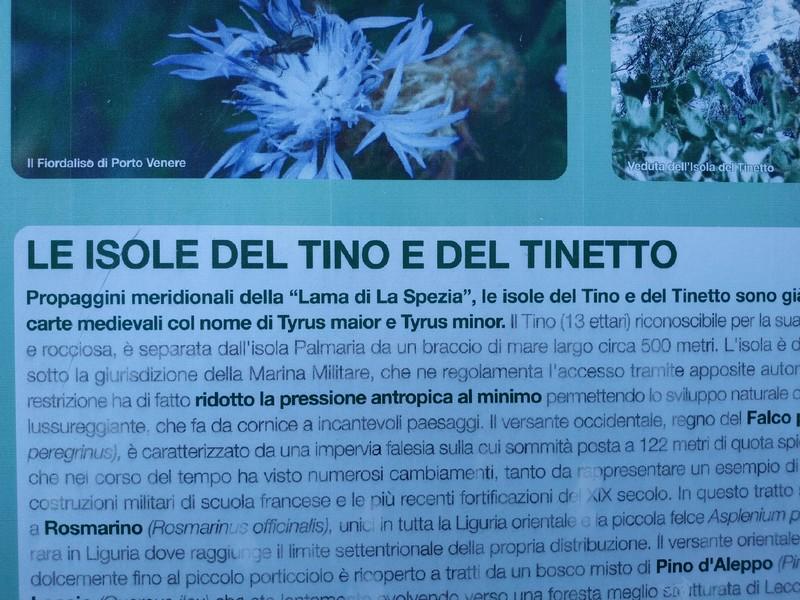 Tino_2020_58